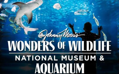Wonders Of Wildlife Aquarium and National Museum